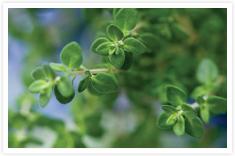 Herbal Combinations
